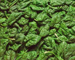alpha lipoic acid in spinach